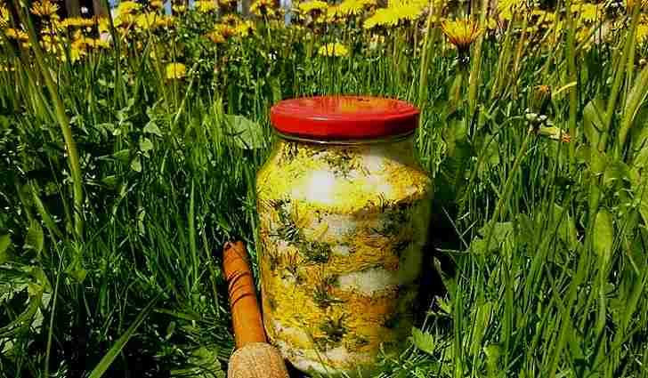 Как приготовить спиртовую настойку цветов одуванчика