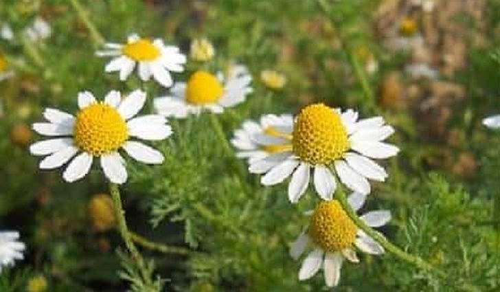 Полезный состав цветков