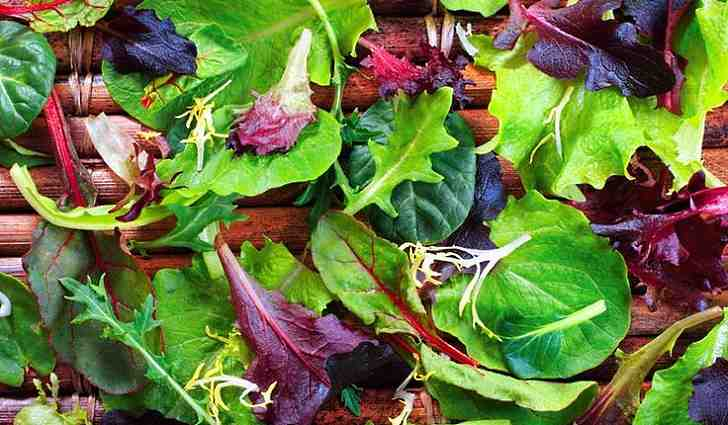 Листовая зелень укрепляет иммунитет