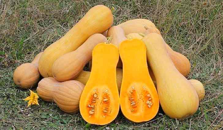 Тыква Сквош vitamin A