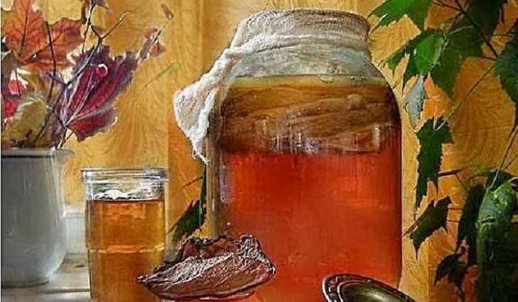 Чайный гриб – способ приготовления