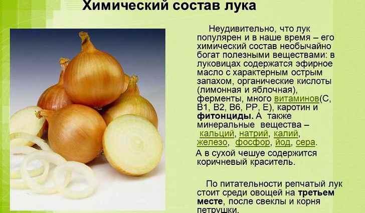 Питательные ценности сырого лука (в 100 г). Сколько калорий имеет лук?