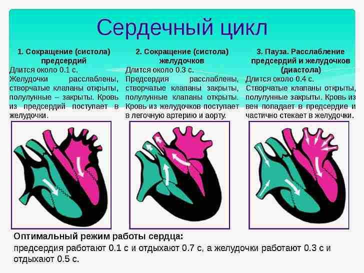 Шиповник хорош для сердца