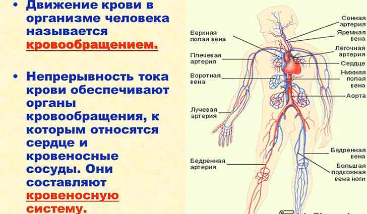 Стимулирует кровообращение