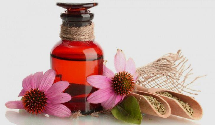 Настой эхинацеи пурпурной для лечения аденоидов у взрослых