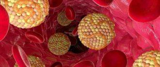 Нужен ли человеку холестерин? Польза и вред холестерина