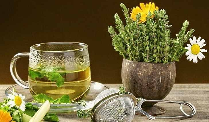Сбор лечебных трав от варикоза