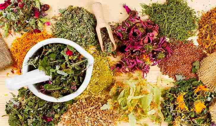 Сборы лечебных трав для лечения легких