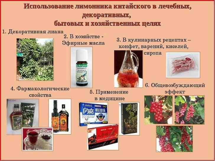 Применение лимонника китайского в медицине