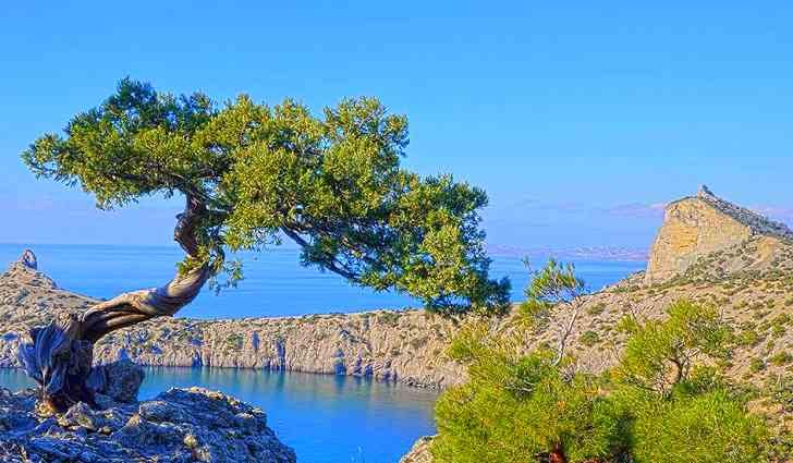 Можжевельник обыкновенный - ботаническое описание