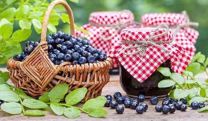 Заготовка ягод черники