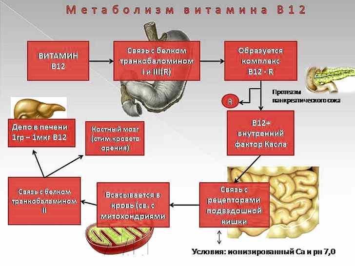 b12-дефицитная анемия симптомы причины лечение