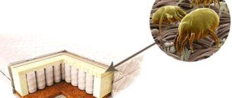 Как избавиться от клещей домашней пыли