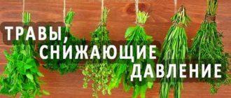 Сбор трав от повышенного давления