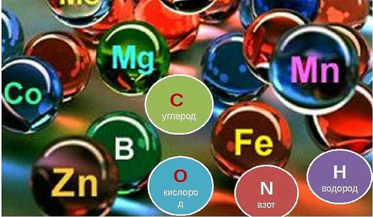 Без каких элементов может обойтись организм