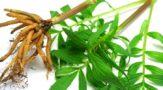 Как приготовить настойку валерианы в домашних условиях