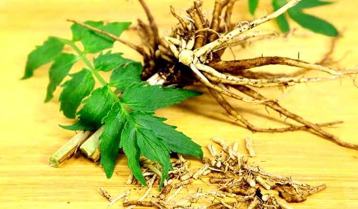 Применение корней валерианы