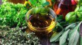 Лечение травами в домашних условиях. Полезные свойства петрушки, пастернака, сельдерея и других растений