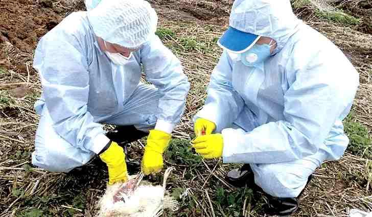 Птичий и свиной грипп