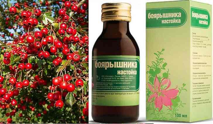 Зеленая аптека для больного с мерцательной аритмией