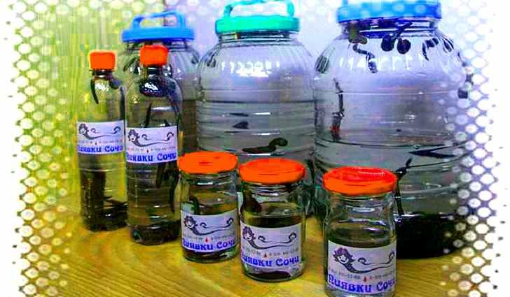 Производство пиявок на биофабрике