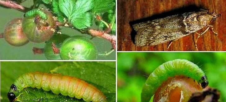 Вредители сада и огорода, борьба с ними