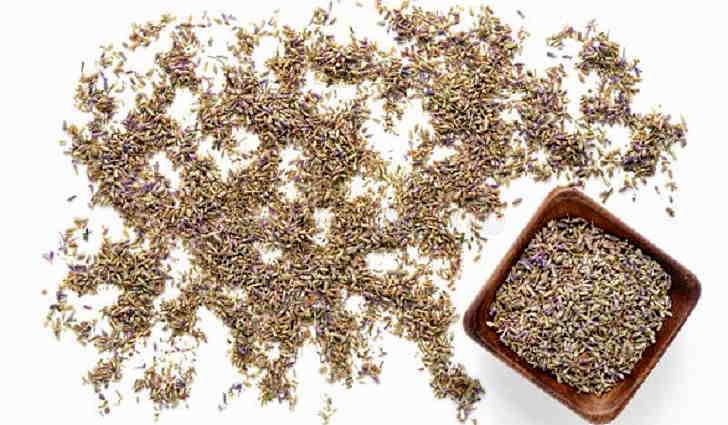 Выращивание лаванды семенами
