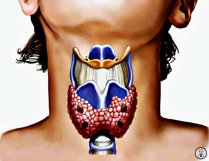 Секреты щитовидной железы