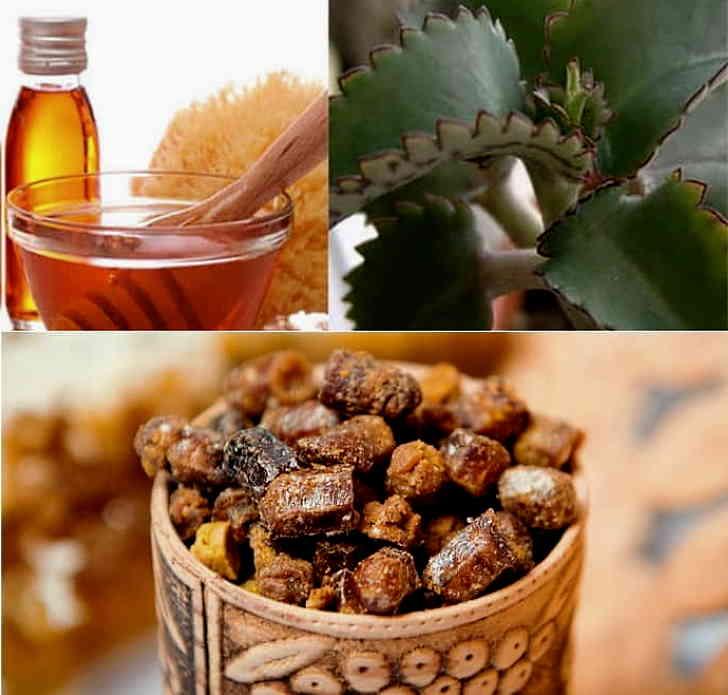 Прополис, мед и каланхоэ - состав для лечения кишечного гриппа