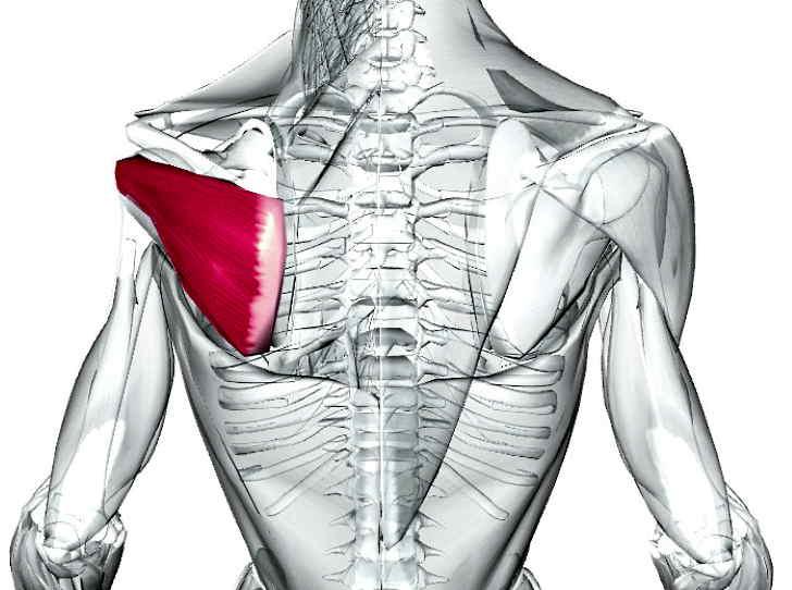 Воспаление подостной мышцы спины