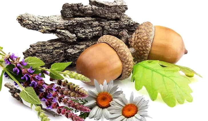 Кора дуба, шалфей входят в рецепты лечения себореи