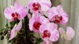 Красота и здоровье человека. Какую роль играют в этом домашние растения