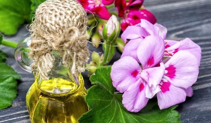 Настой герани для лечения стоматита