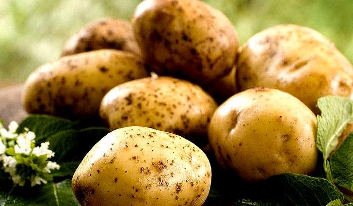 Сырым картофелем лечат мигрень
